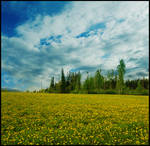 BG Dandelion Field