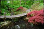 BG Japanese Garden