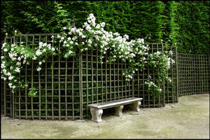 BG Garden Bench by Eirian-stock
