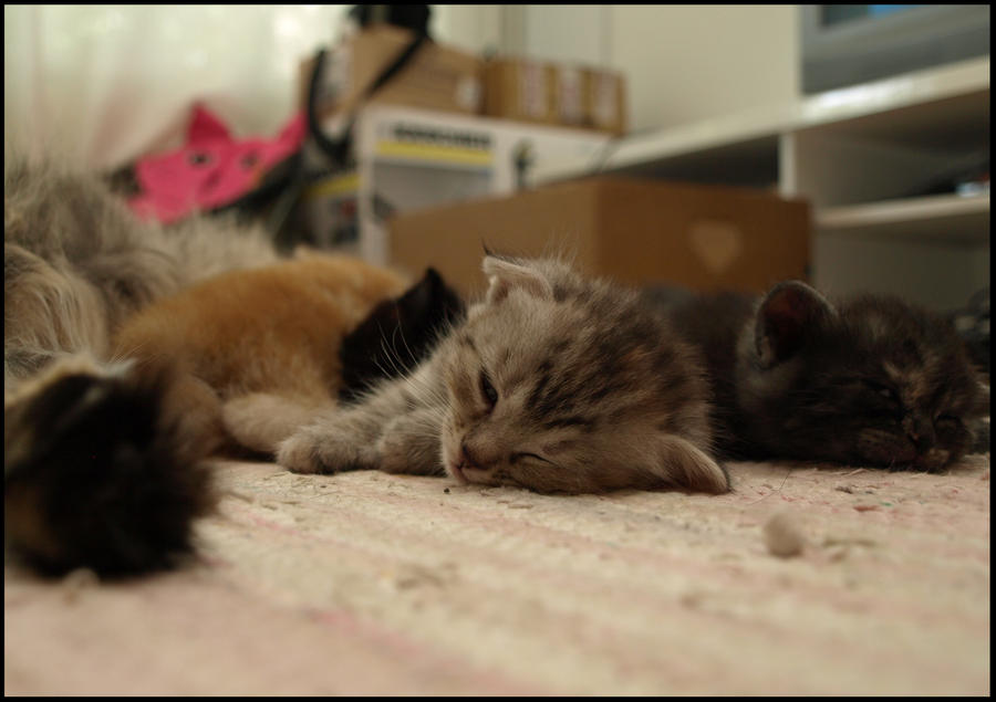 Sleepy Kittens by Eirian-stock