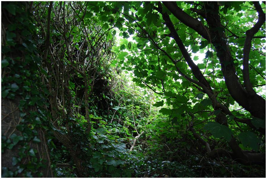BG Into The Green by Eirian-stock