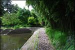 BG Pathway