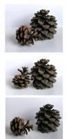 Pine Cones by Eirian-stock