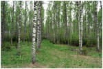 BG Spring In A Grove III