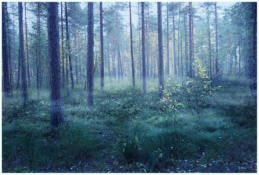 Misty Forest Acrylic -繪畫和圖片的組合,迷霧森林充滿了松樹和其他常綠喬木, 野生精靈在森林內的某處。。。 - milk  - ☆ Milk ☆ 平平。淡淡。也是真。