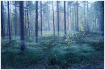 BG Misty Forest