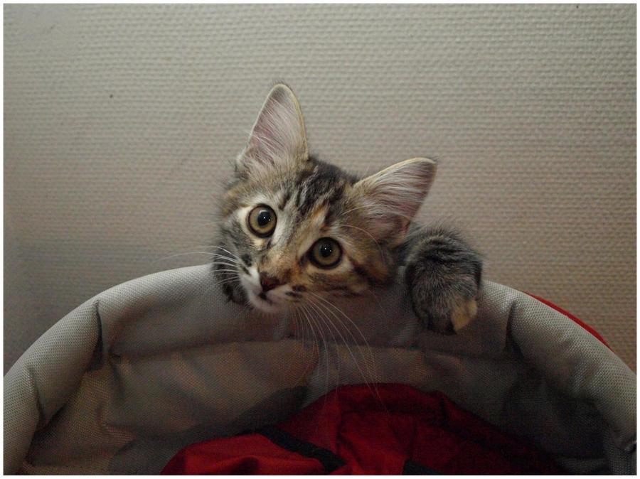 Curious Cat by Eirian-stock