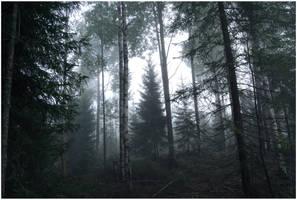 BG Forest Mist I by Eirian-stock