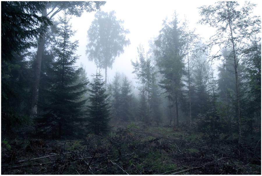 BG Forest Mist II by Eirian-stock
