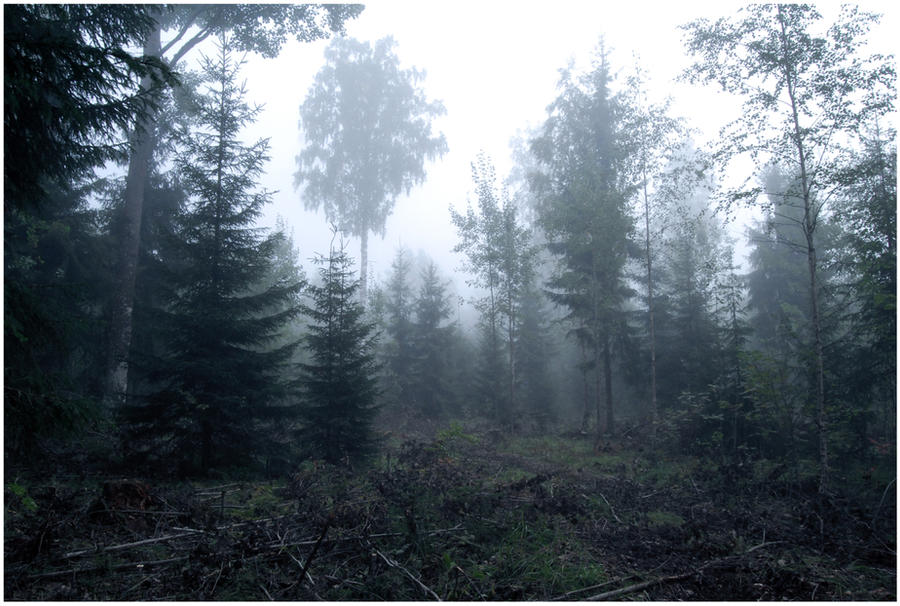 BG Forest Mist II