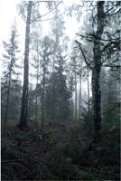 BG Forest Mist III by Eirian-stock