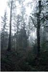 BG Forest Mist III