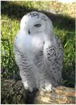 Snowy Owl I