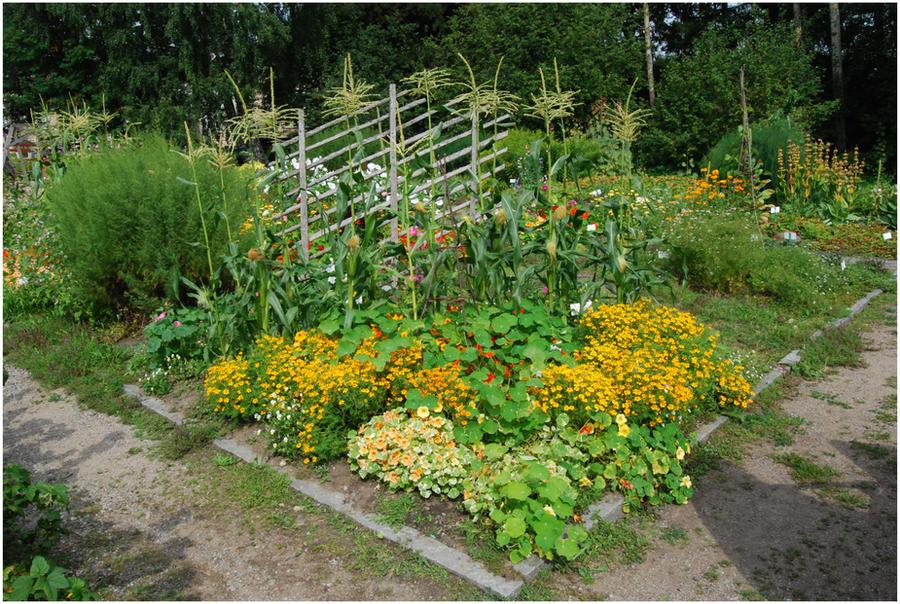 BG Colorful Garden by Eirian-stock