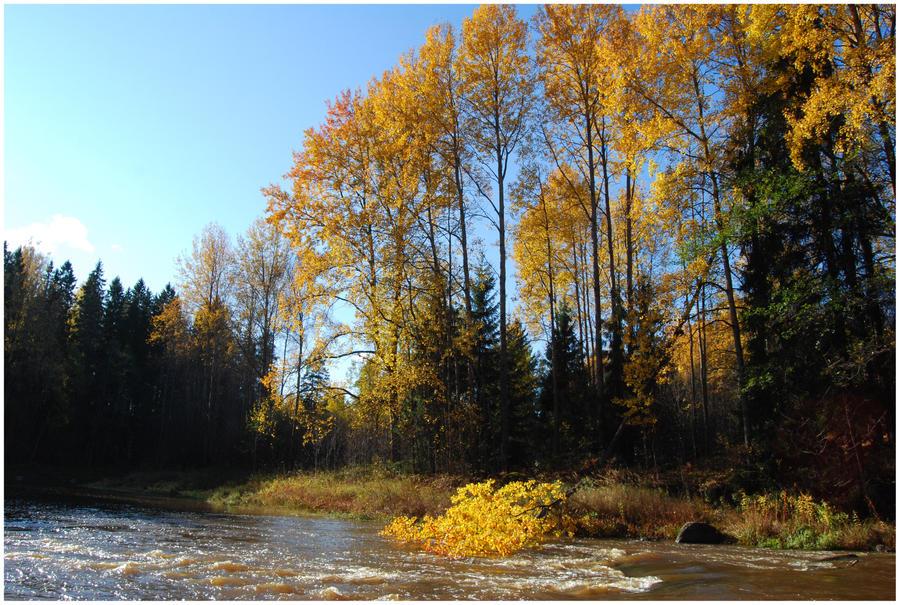 BG Autumnal VII by Eirian-stock