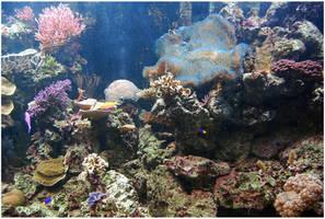 Underwater IV by Eirian-stock