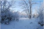 BG World Of Snow VIII