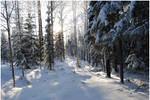 BG World Of Snow XIX