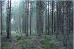 BG Pine Forest I