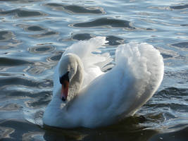 The Swan Song V by Eirian-stock