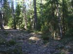 Forest Scenery 1