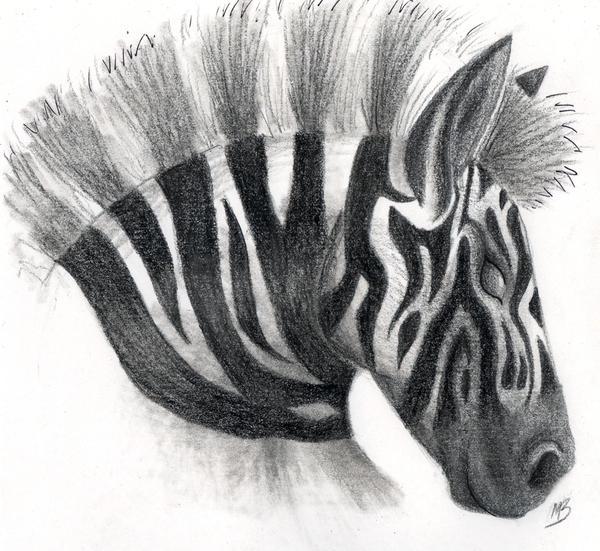 zebra pencil drawing - photo #24