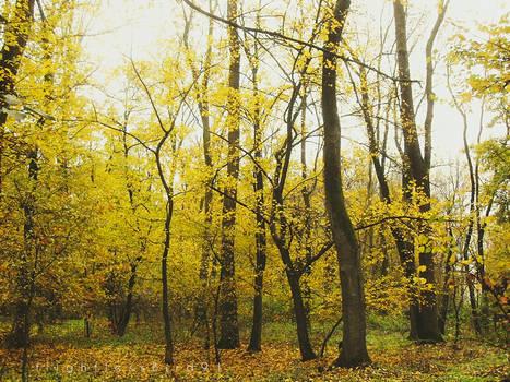 chasing autumn