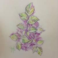A Little Plant