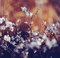 brrr, winter by feelicious