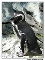 Penguin by FilipeDaniel