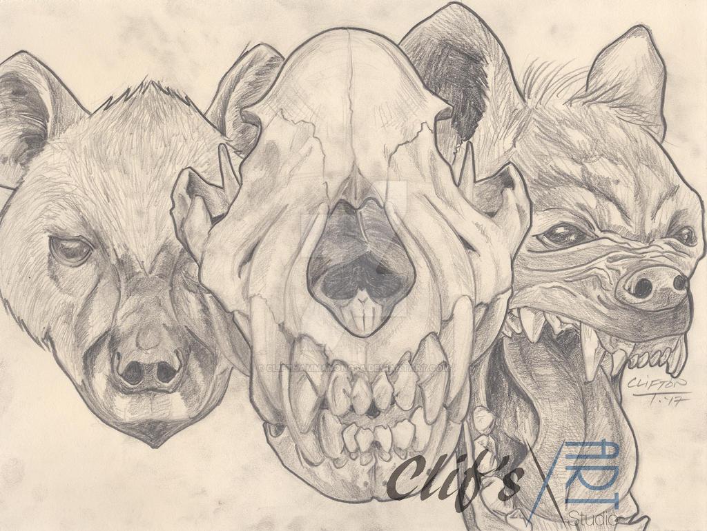 Hyena by clifthammavongsa