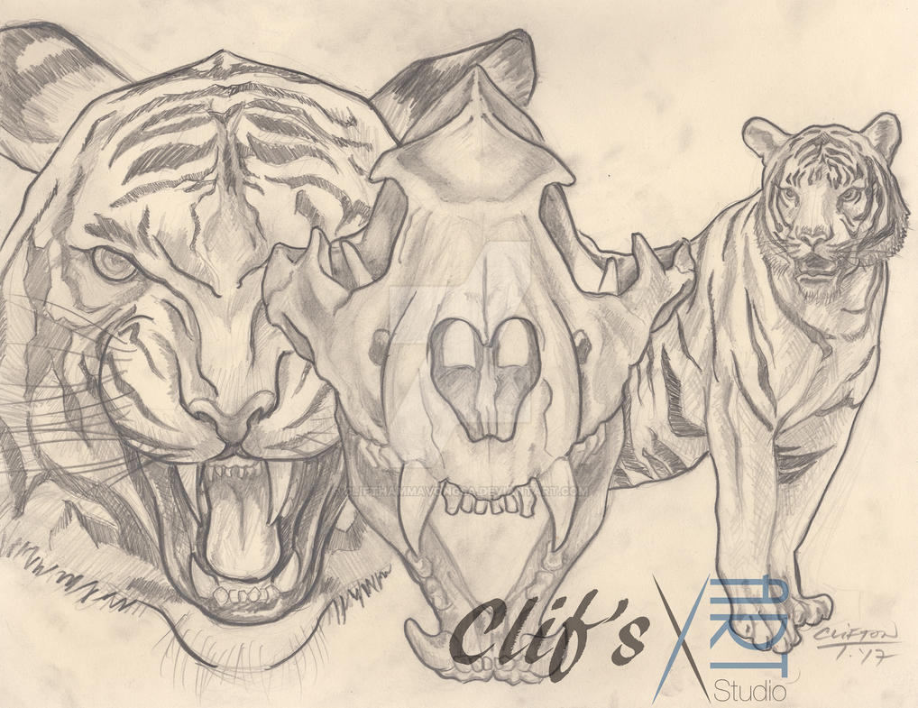 Tiger by clifthammavongsa