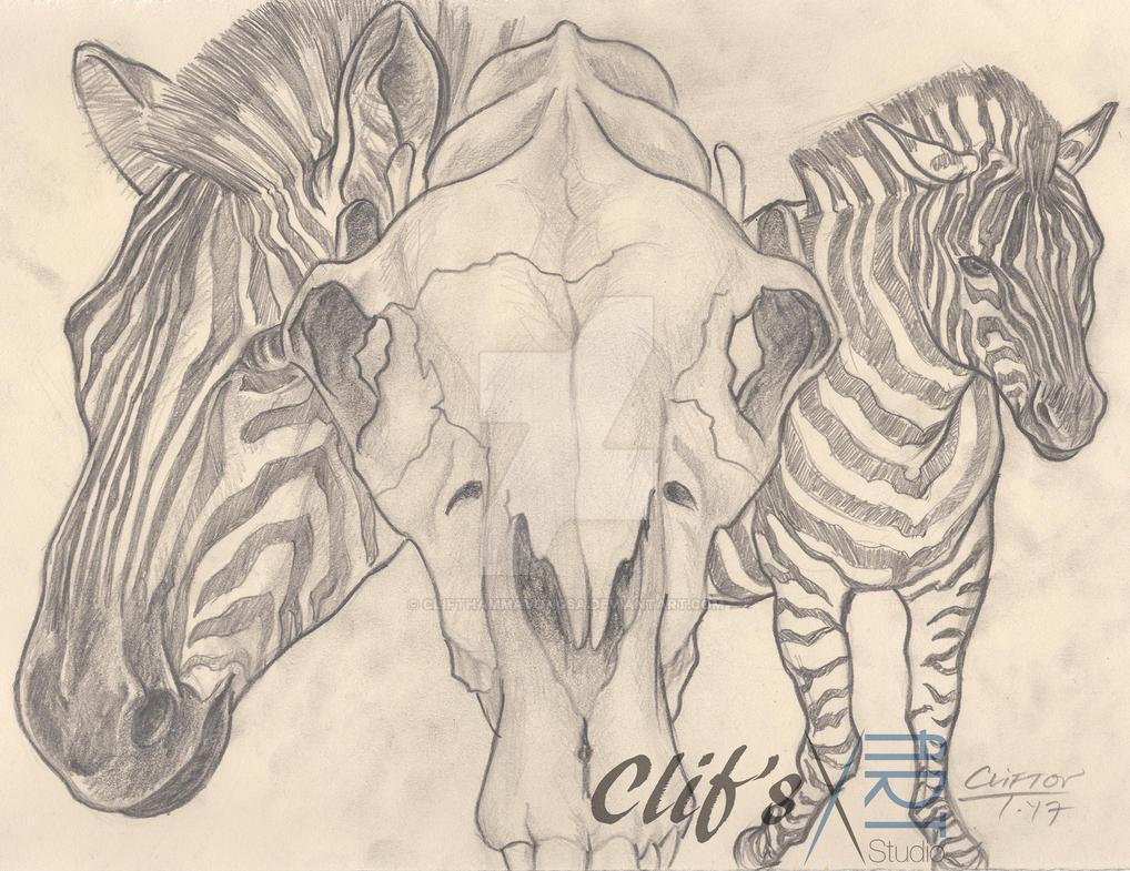 Zebra by clifthammavongsa