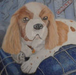 Cavalier King Charles by Tizermax
