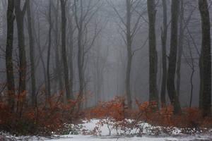 Fog by katia-iva