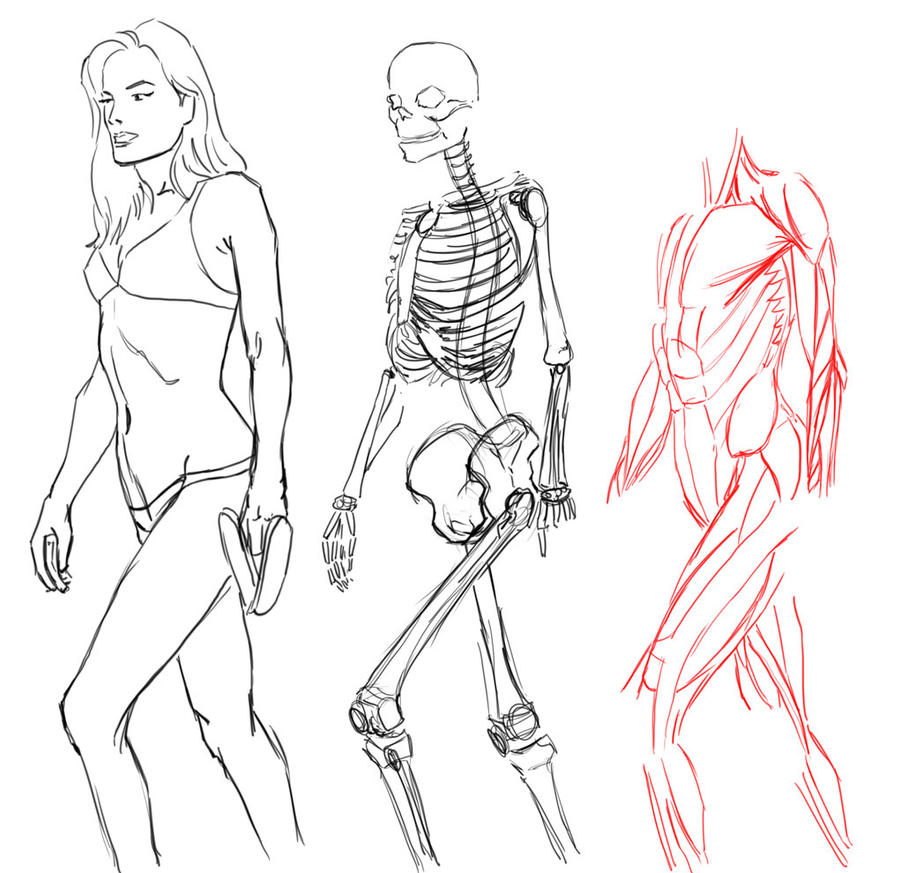 Female anatomy by MaxAKbar on DeviantArt