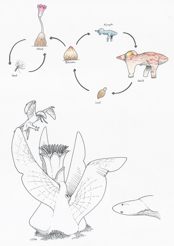 Blossoms/Neoteny 2 by juniorWoodchuck