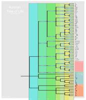 Cladogram of Auroran Life, Version 290119 by juniorWoodchuck