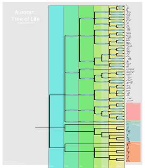 Cladogram of Auroran Life, Version 290119