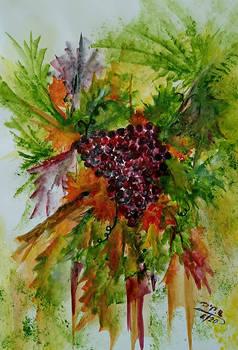 Vineyard...(182)