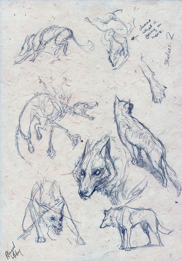 WOlf : studies by Abz-J-Harding