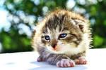 Cat 04 by shadddow