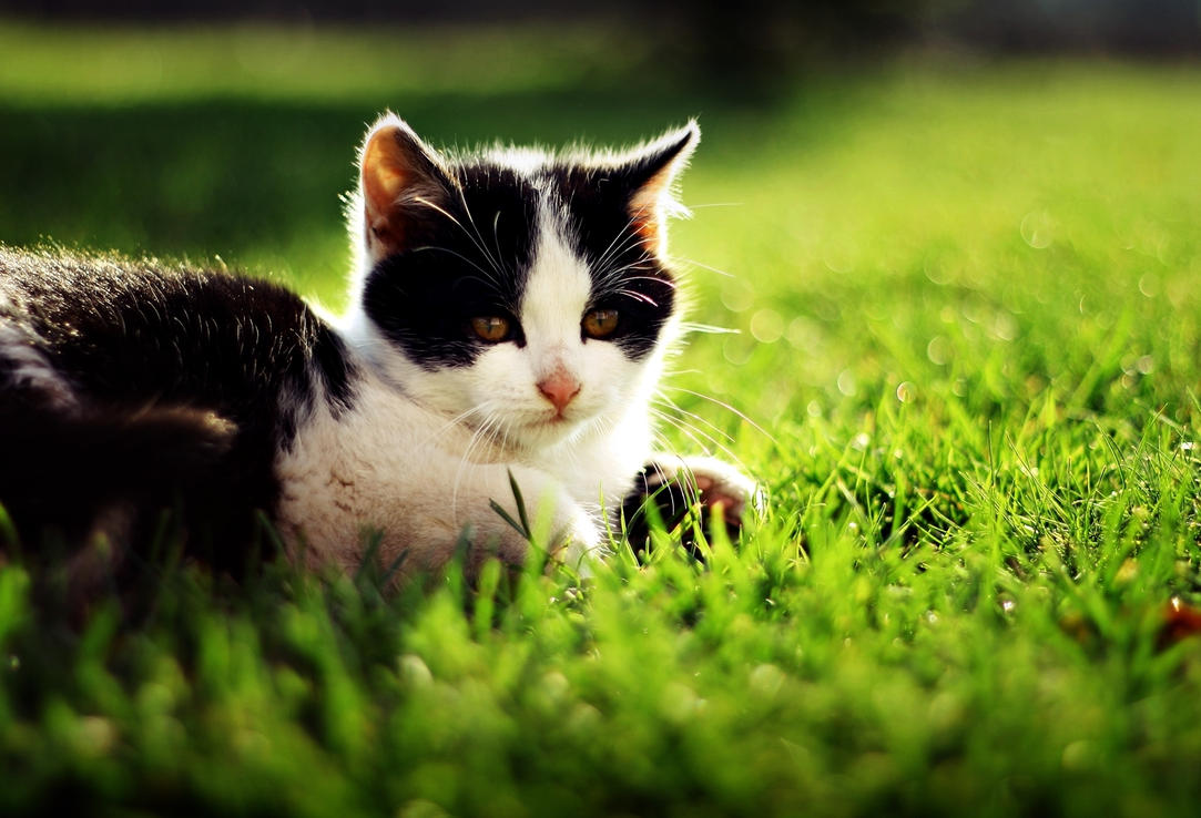 Little cat by shadddow
