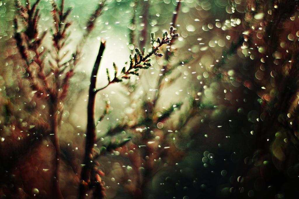 Wonderland VI by shadddow