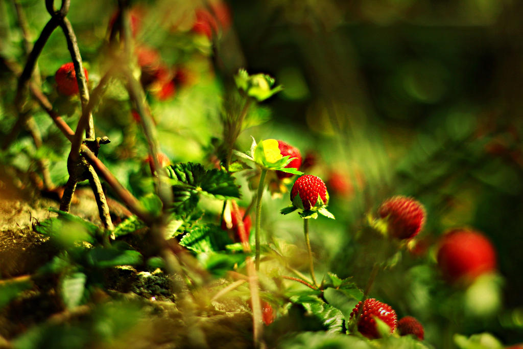 wild strawberry. by shadddow