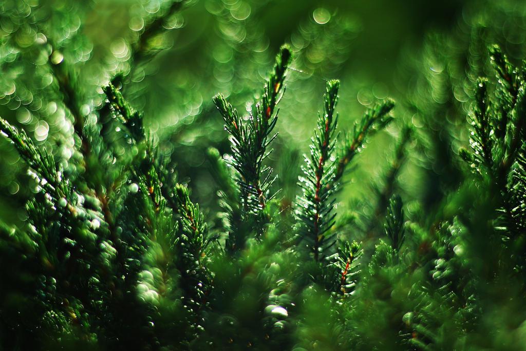Green by shadddow