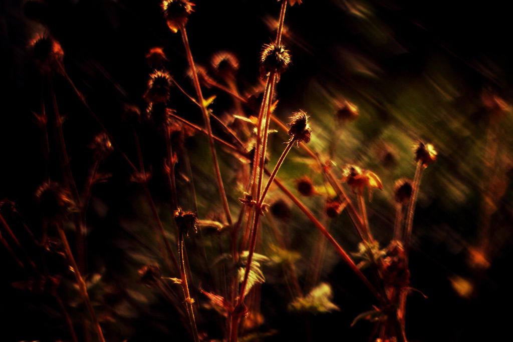 Dark by shadddow