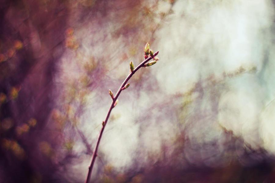 Spring III by shadddow