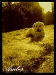 Amber Sunshine