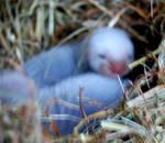 New baby ferrets